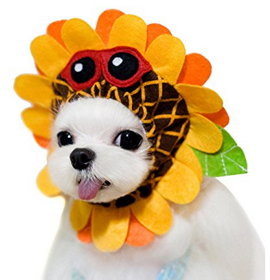 Maltese Dog Halloween Costume